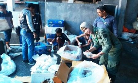 Penyelundupan Ratusan Koral Digagalkan Team BKSDA
