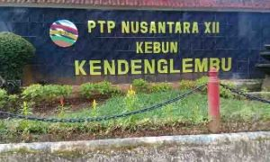 PTPN XII