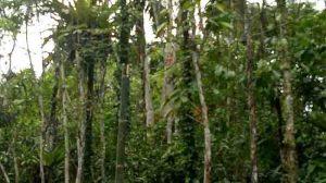 Foto : Bambu Di Gunakan Sebagai Tiang Listrik