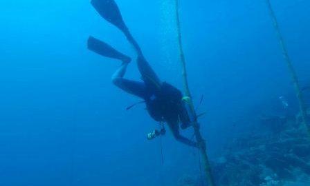 Pemda Wakatobi Kolaborasi Bersama Diver Wakatobi untuk Upacara Bawah Laut