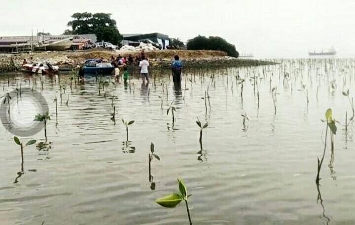 All Biker' s Morowali menanam 3.000 pohon mangrove di desa Keurea kecamatan Bahodopi